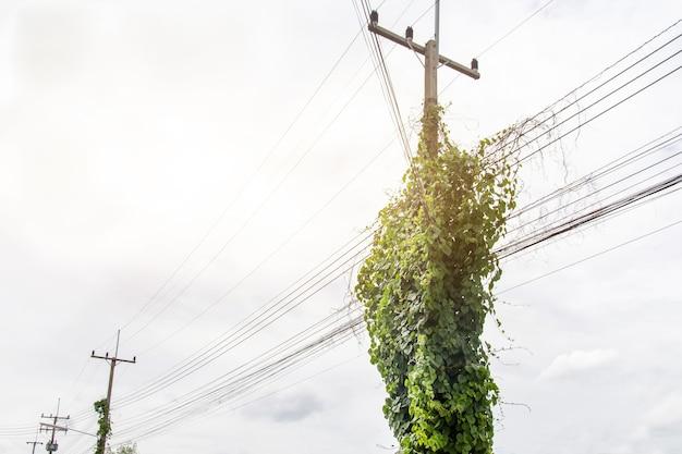 Grama em postes elétricos e fios elétricos potencialmente perigosos e propriedade danificada