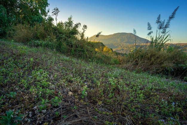 Grama, ligado, a, campo, vista, alcance montanha, ligado, em, khao kho, parque nacional, em, phetchabun