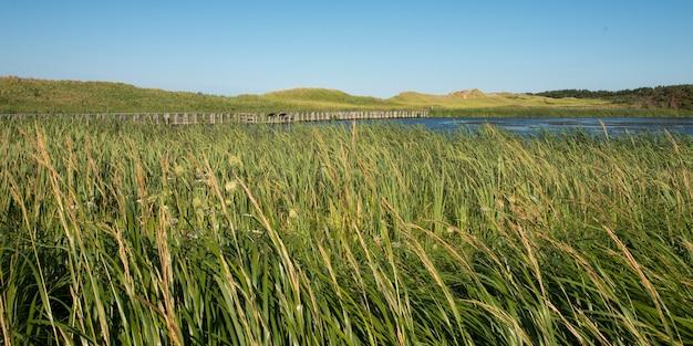 Grama, ligado, pântano, em, cavendish, dunelands, rastro, verde, gables, príncipe edward island, canadá