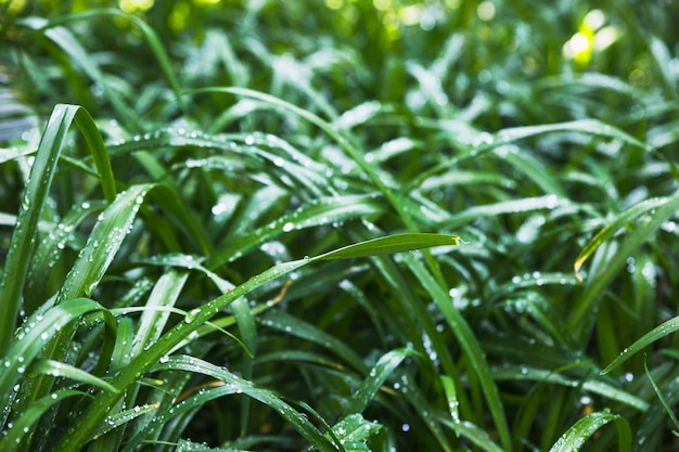 Grama molhada do jardim no dia ensolarado