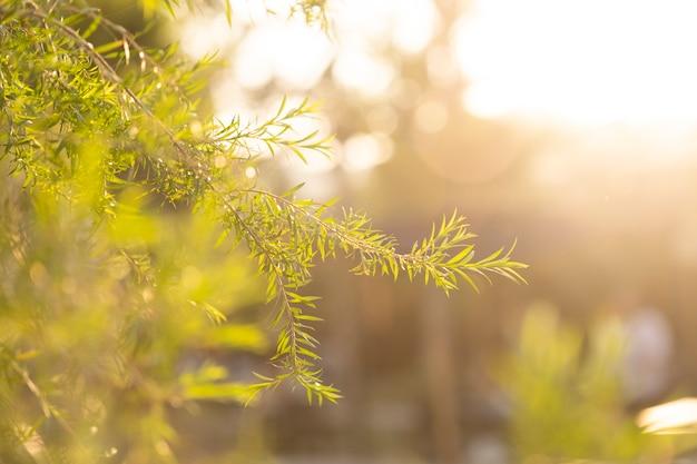 Grama no céu do prado e do por do sol na parte traseira.
