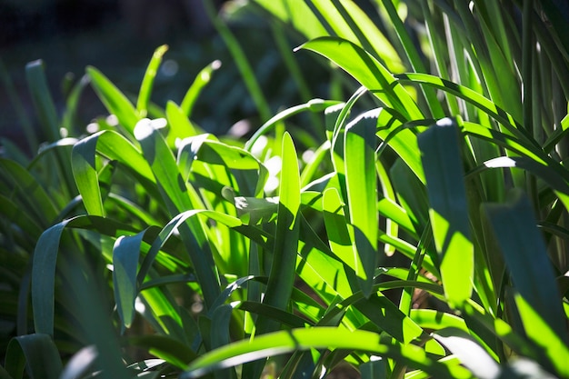 Grama no gramado brilhante