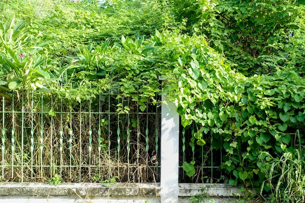 Grama, overgrown, casa