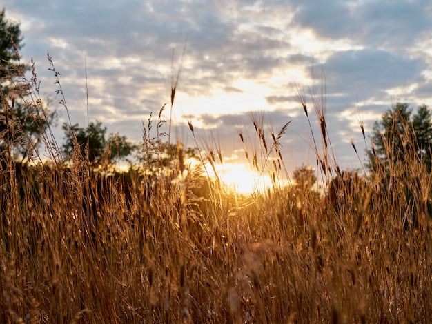 Grama seca ao pôr do sol