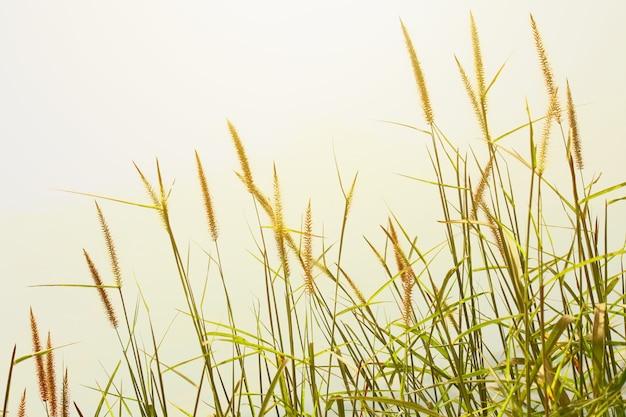 Grama seca bonita no por do sol na montanha cenário rochoso sob a luz solar de brilho.