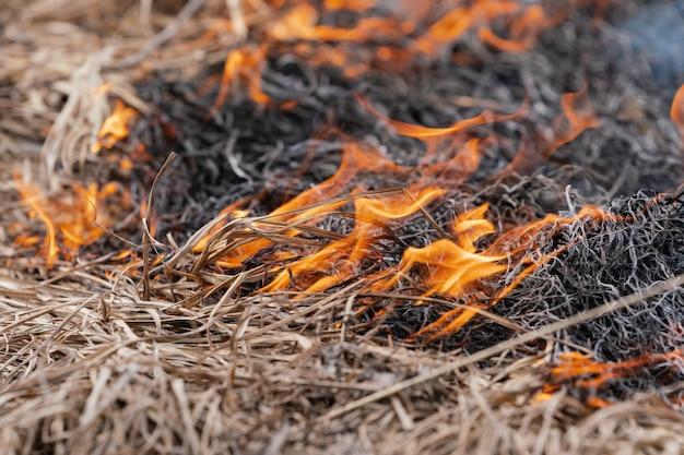 Grama seca queimando em um prado na primavera. fumaça e fogo destroem toda a vida selvagem (foco suave, borrão de fogo forte).
