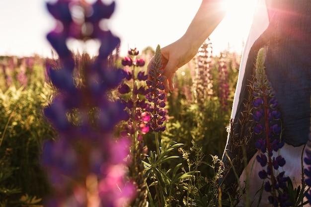 Grama tocante da flor da mão da mulher no campo com luz do por do sol.