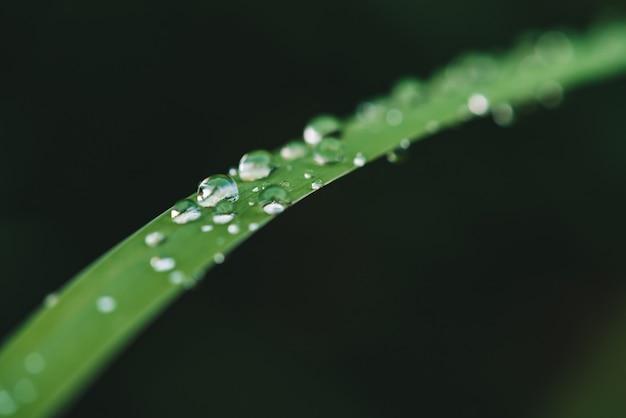 Grama verde brilhante vívida bonita com close-up das gotas de orvalho com espaço da cópia. vegetação pura, agradável e agradável com gotas de chuva à luz do sol em macro. fundo de plantas texturizadas verdes em tempo de chuva.