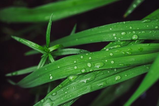 Grama verde brilhante vívida bonita com close-up das gotas de orvalho com espaço da cópia. vegetação pura, agradável e agradável com gotas de chuva à luz do sol em macro.