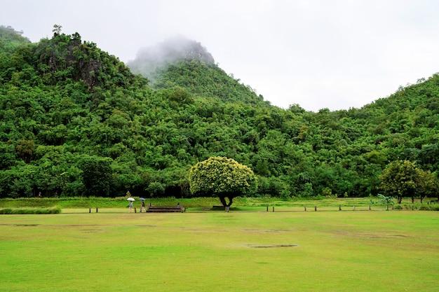 Grama verde cheia de nevoeiro com vista para a montanha verde após chover