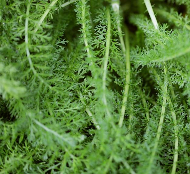 Grama verde com gotas de água no sol