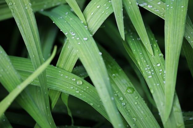 Grama verde com gotas de água