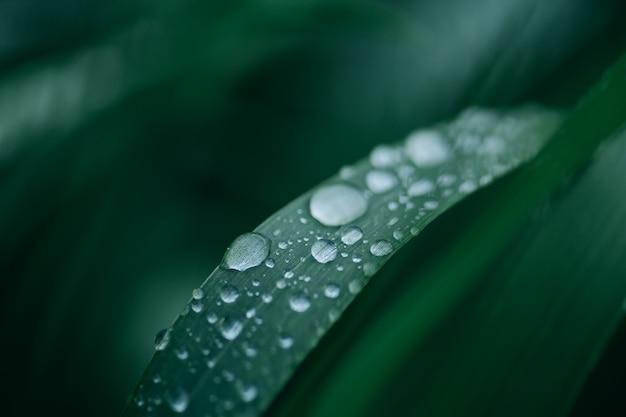 Grama verde com gotas de orvalho no verão ao amanhecer à luz do sol