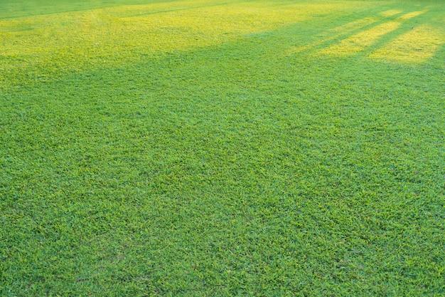 Grama verde com luz solar no parque