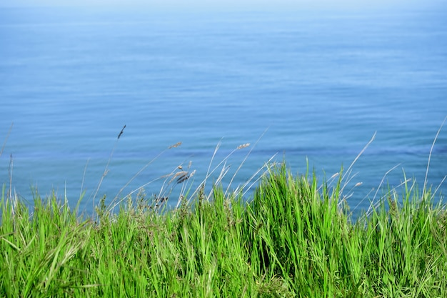 Grama verde contra o mar
