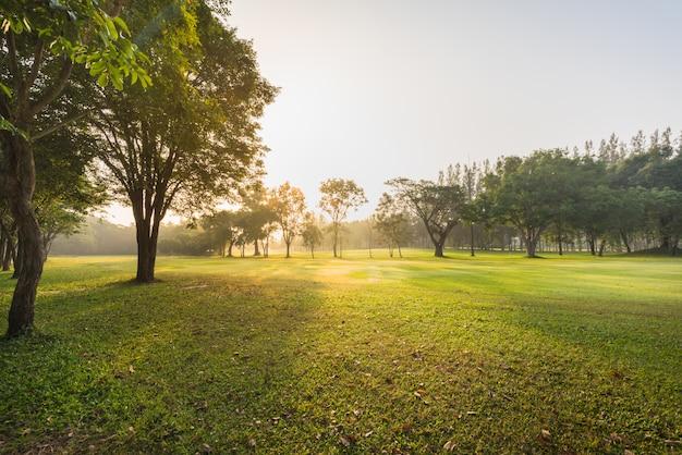 Grama verde do cenário no parque natural na manhã, luz do sol bonita com golfe do fairway