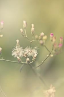 Grama verde e flores brancas pequenas no campo. bela paisagem de verão.