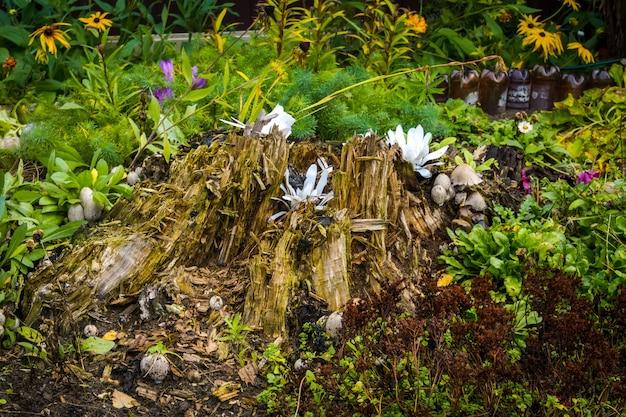 Grama verde e flores durante o início do outono.
