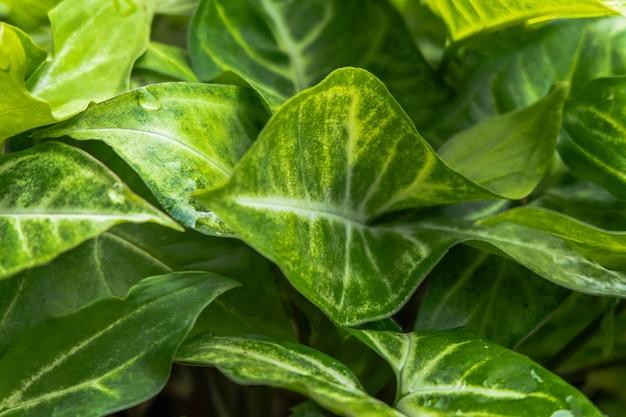 Grama verde e fundo de folhas verdes