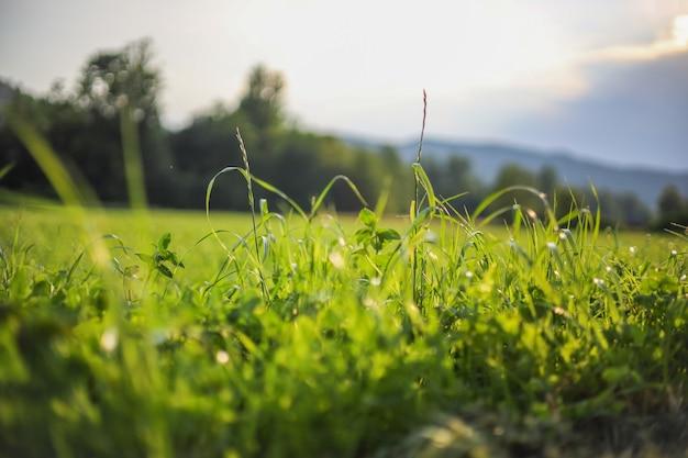 Grama verde e sol. vale de flores silvestres, paisagem de prados de verão