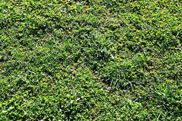 Grama verde em fundo de textura de parque hd