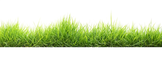 Grama verde em jardim isolada em branco