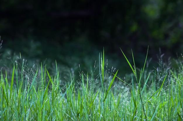 Grama verde em reflexo da luz natural durante a primavera
