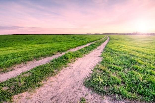 Grama verde em um campo com uma estrada