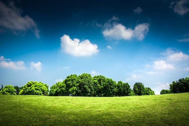 Grama verde em um campo de golfe