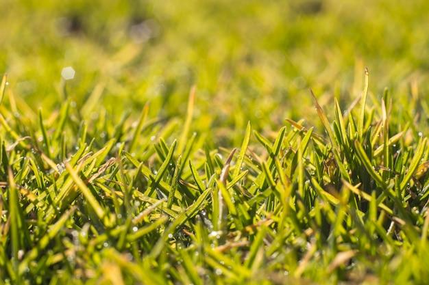 Grama verde em um dia ensolarado de primavera