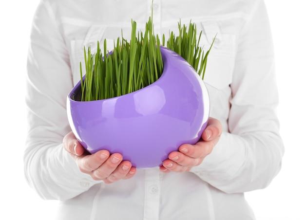 Grama verde em vaso decorativo em mãos isoladas em branco
