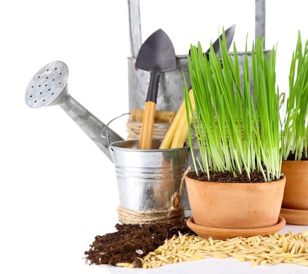 Grama verde em vasos de flores e ferramentas de jardinagem, em branco