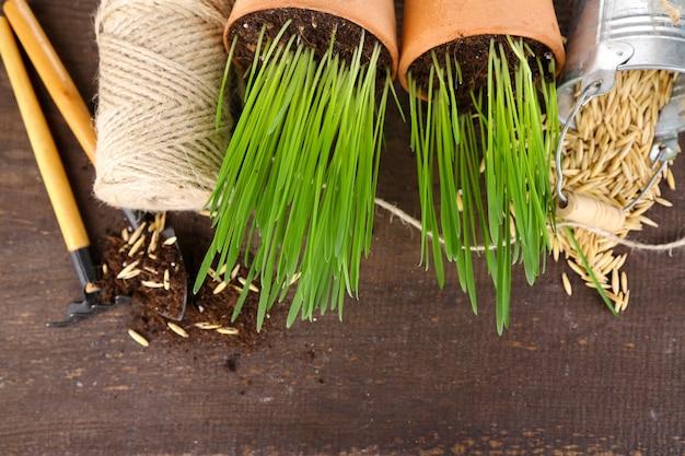 Grama verde em vasos de flores e ferramentas de jardinagem, em mesa de madeira