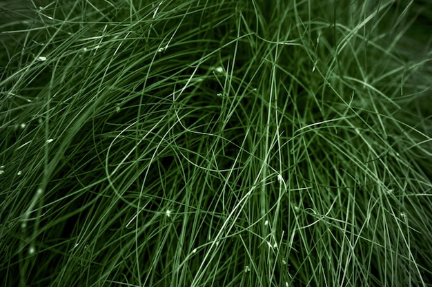 Grama verde escura, imagem de fundo tonificada