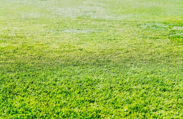 Grama verde fresca em hd de fundo de campo de futebol