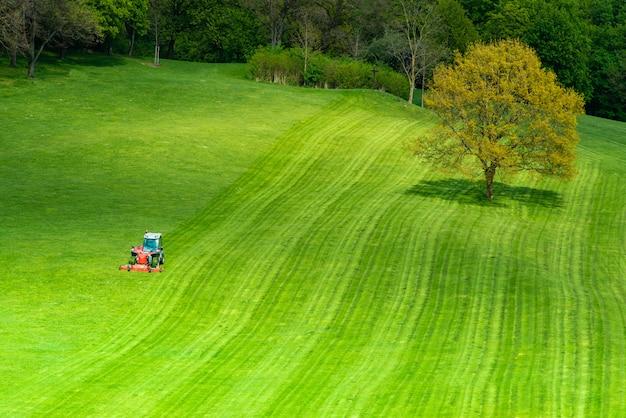 Grama verde, ligado, um, campo golfe