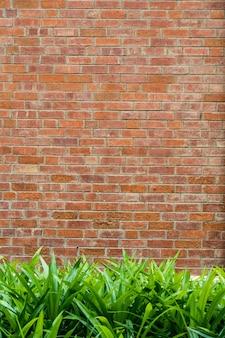 Grama verde na frente da parede de tijolo para o fundo