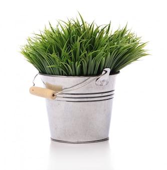 Grama verde no balde