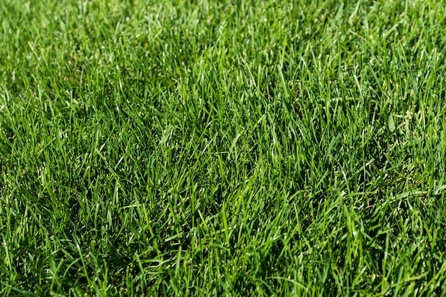 Grama verde no jardim, piso verde
