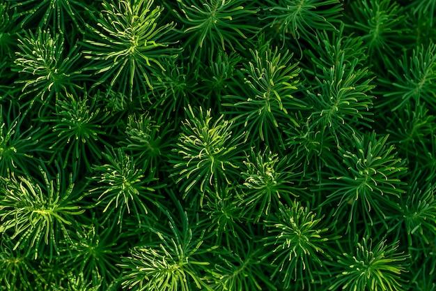 Grama verde planta decorativa