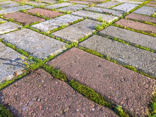 Grama verde que cresce nas telhas do pavimento no parque.