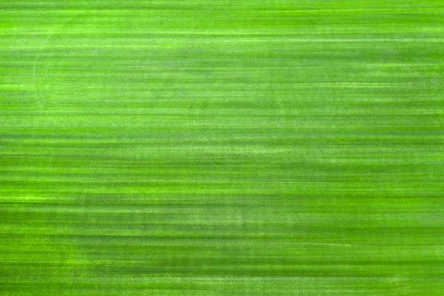 Grama verde recém-cortada, Foto Premium