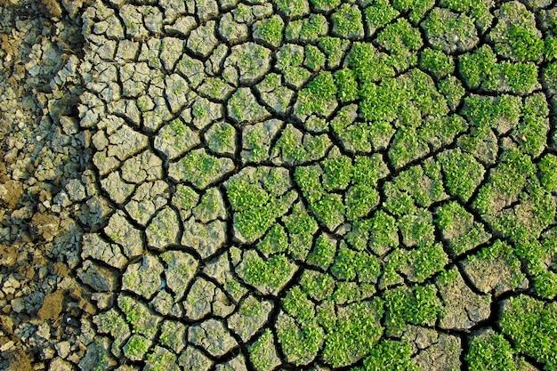 Grama verde seca