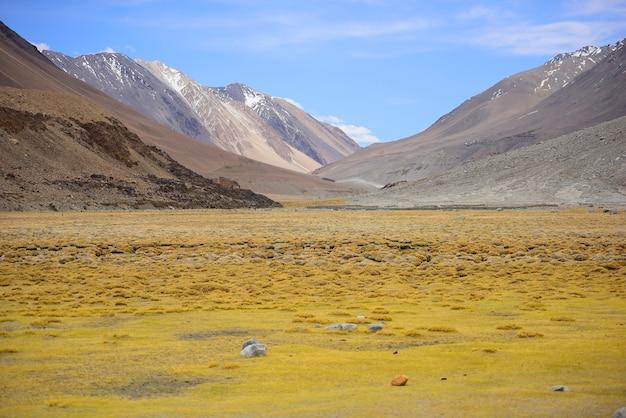 Gramado amarelo no fundo das montanhas bonitas e dos céus claros. (seletivo fo