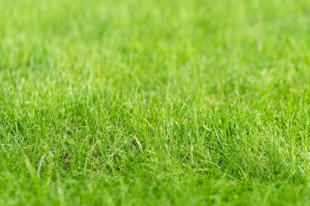 Gramado de grama verde no jardim, conceito de fabricação de piso verde, treinamento em campo de futebol ou gramado de golfe
