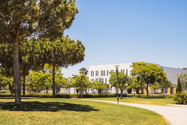 Gramado do campus em dia ensolarado