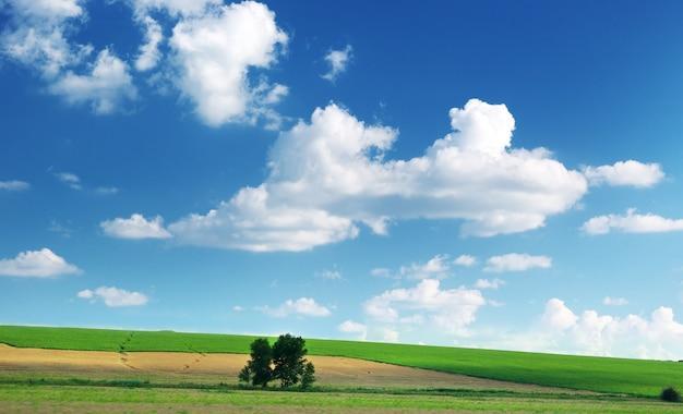 Gramado e céu nublado.