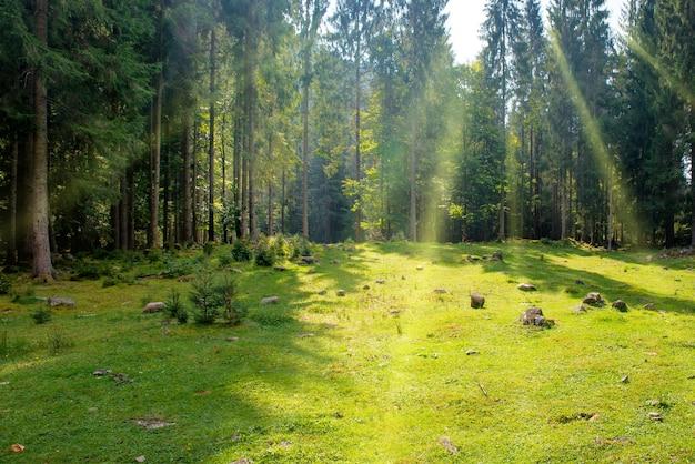 Gramado verde em um parque com grama e árvores grandes