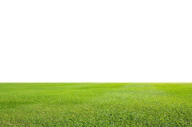 Gramado verde fresco isolado no fundo branco