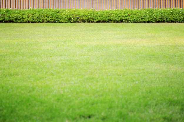 Gramado verde no jardim.
